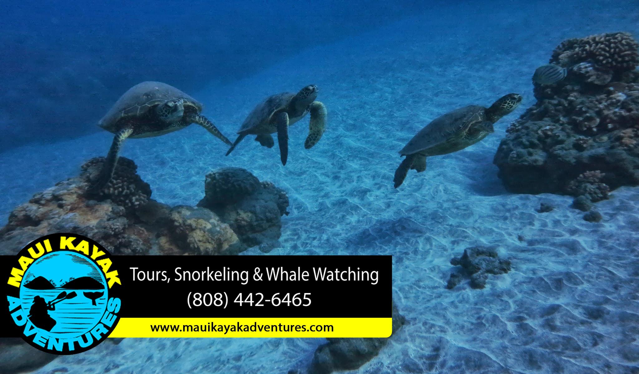 Snorkeling Gear Maui Snorkeling Tours Maui