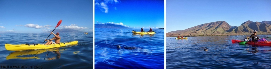 Maui Kayak Adventures