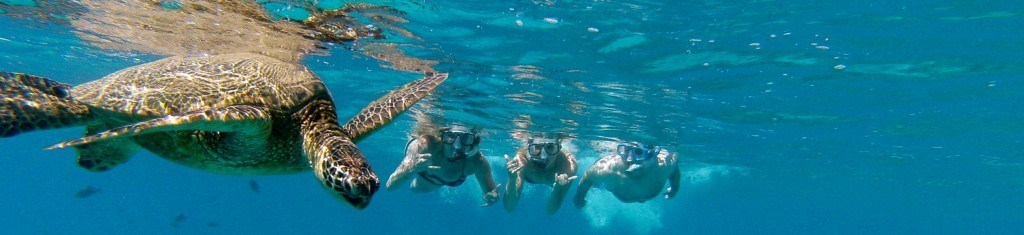 Snorkeling with Turtles in Maui