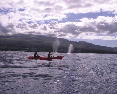 Whale Watching Below Haleakala