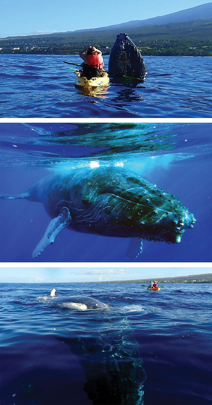Unforgettable humpback whale experience on Maui