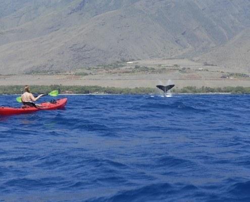 Olowalu Whale Fluke Single Kayak