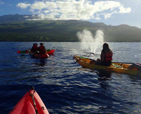 Humpback Whale Maui Spout