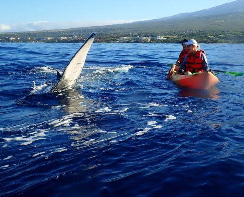 Humpback Whale Maui Pec Slap