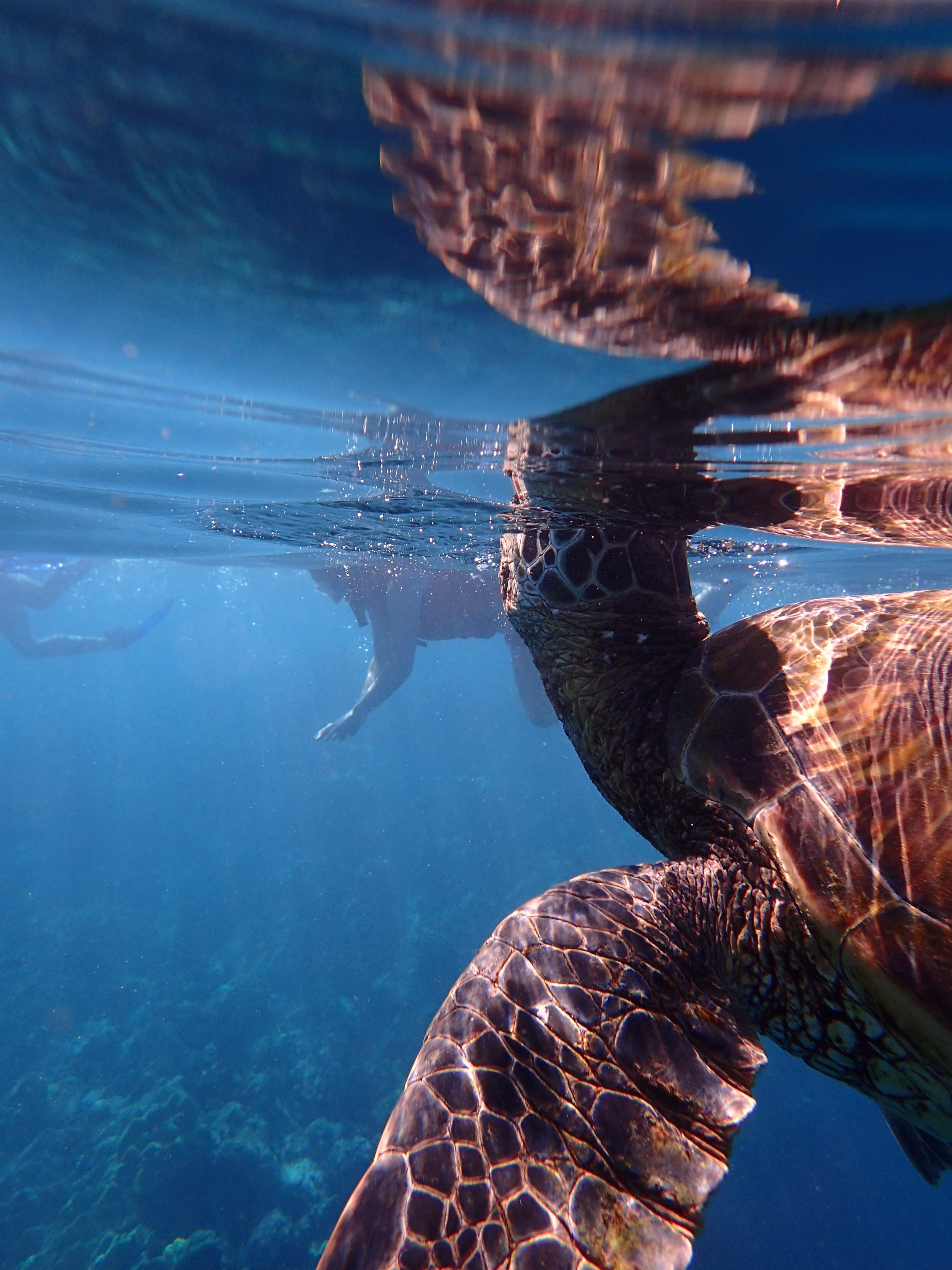 sea turtle breathing