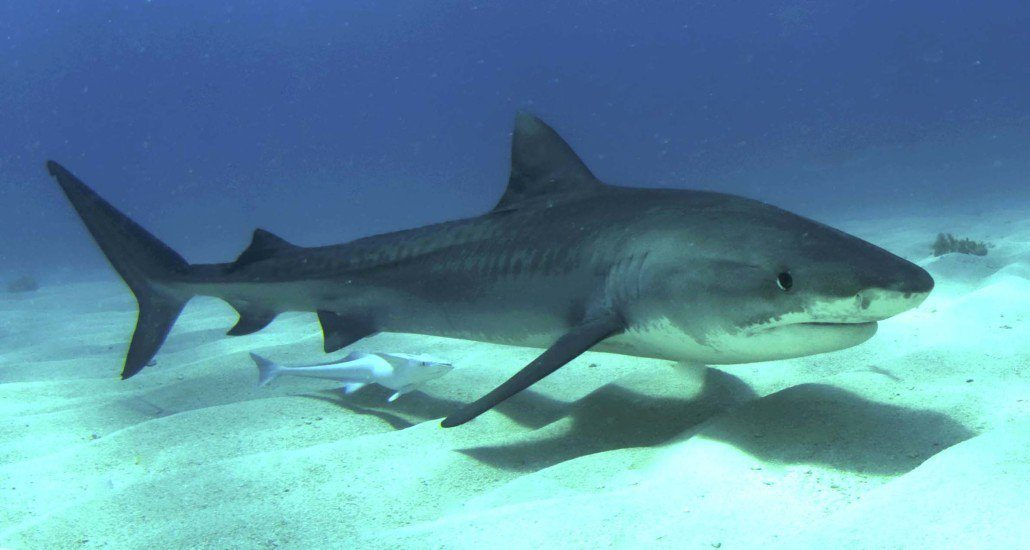 Why You Shouldn't Worry About Being Attacked by a Shark in