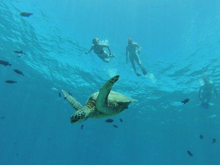Turtle Town Snorkelers