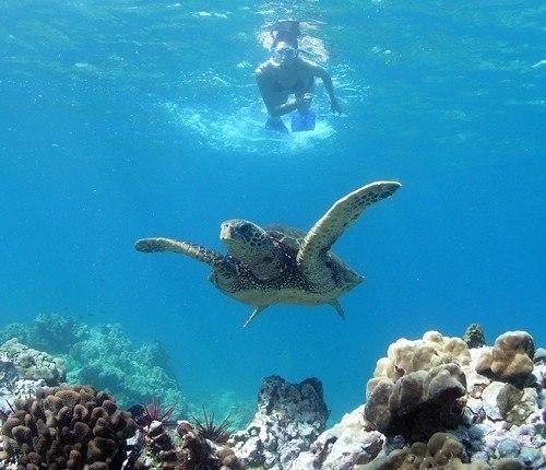 Turtle Town Maui Snorkeler