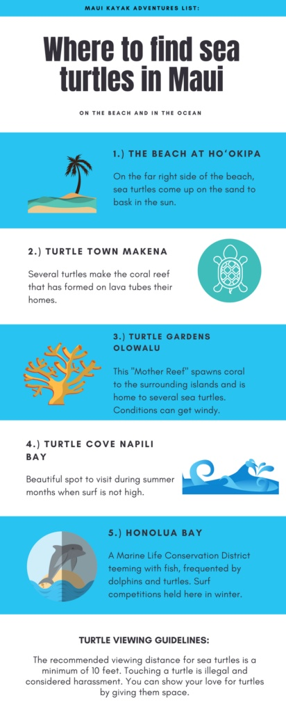 Where to find sea turtles in Maui