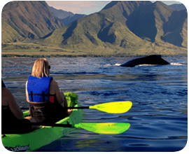 kayak-whale-watch