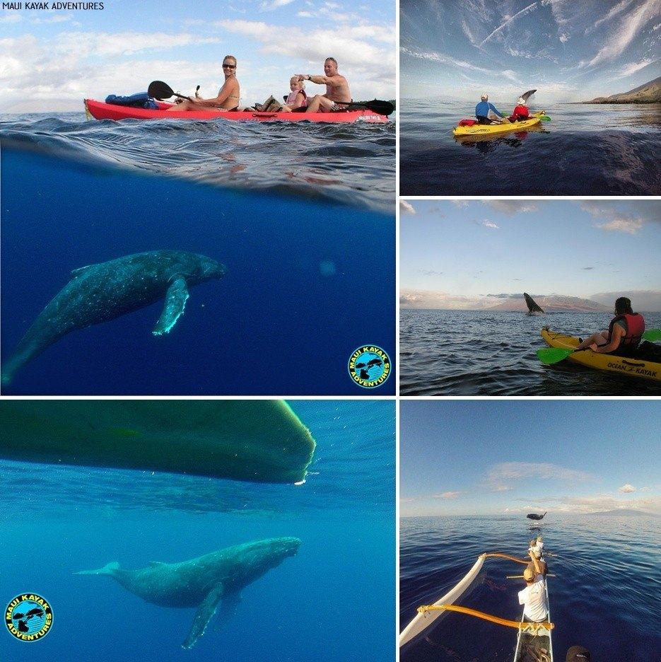 whale watching tours maui