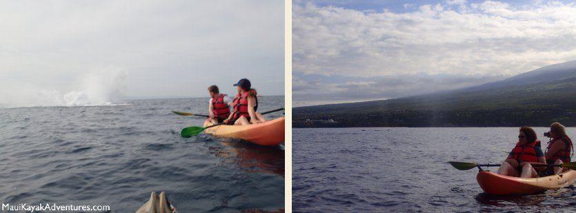 kayak whales