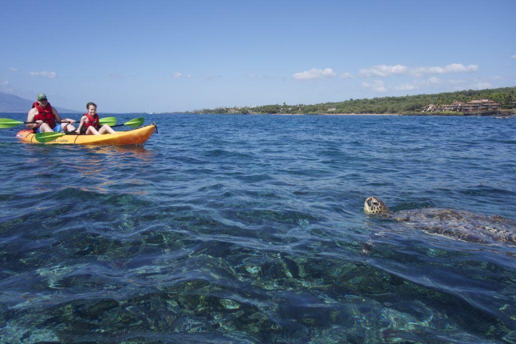 Kayak and Sea Turtle