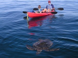 Green Sea Turtle and Kayak Family