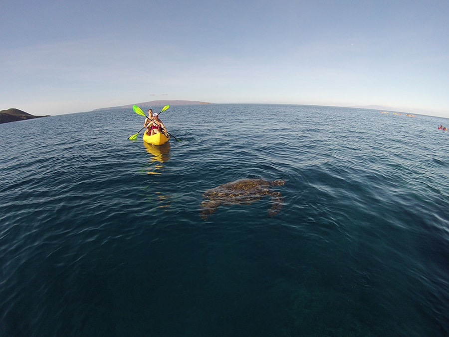 Kayak Tour in Maui with Sea Turtle