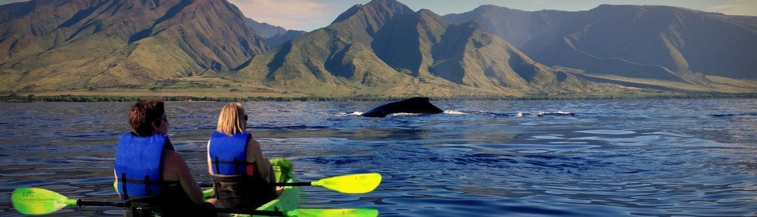 maui whale watching kayak