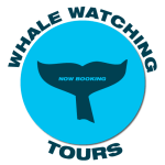 maui-whale-watching-tour