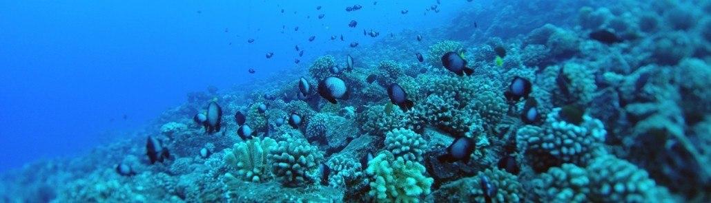molokini crater underwater