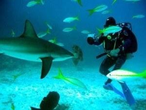 shark dive maui e
