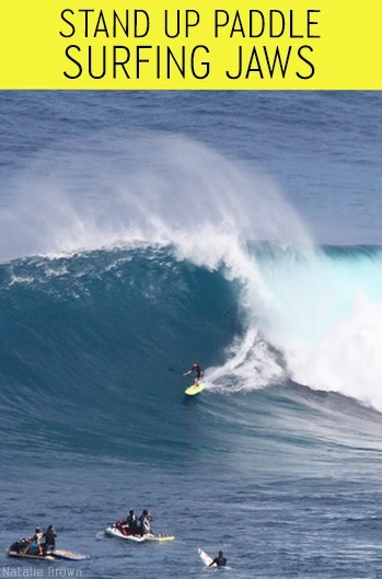 Stand up surf Jaws